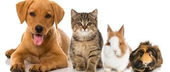 Naturheilkundliche Behandlung von Haustieren